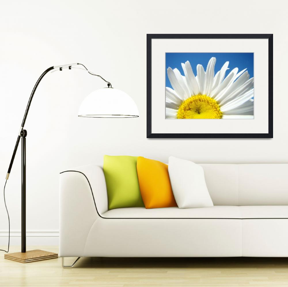 """Daisies art prints White Daisy Summer Floral&quot  (2010) by BasleeTroutman"