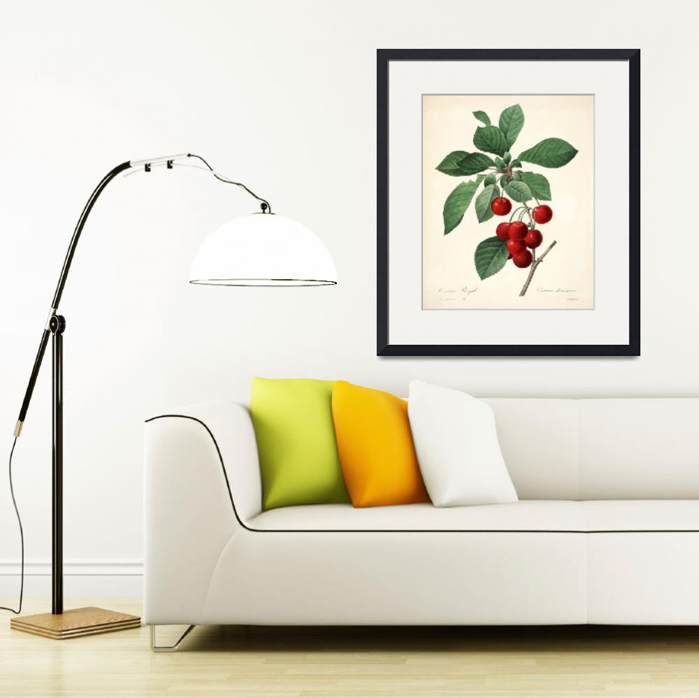 """Cherries, Pierre-Joseph Redouté&quot  by lookbackart"
