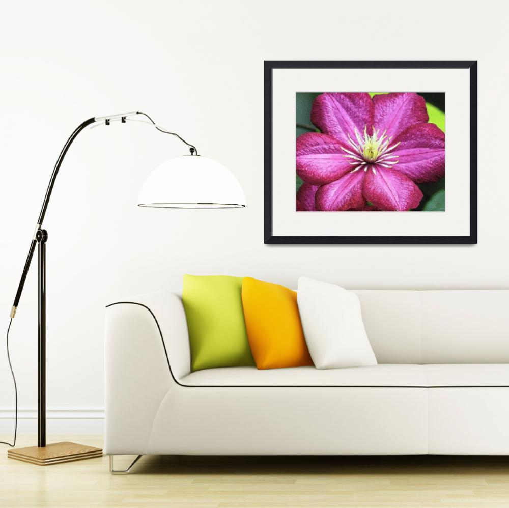 """Purple Clematis&quot  (2010) by ROBERTSCOTTPHOTOGRAPHYY"