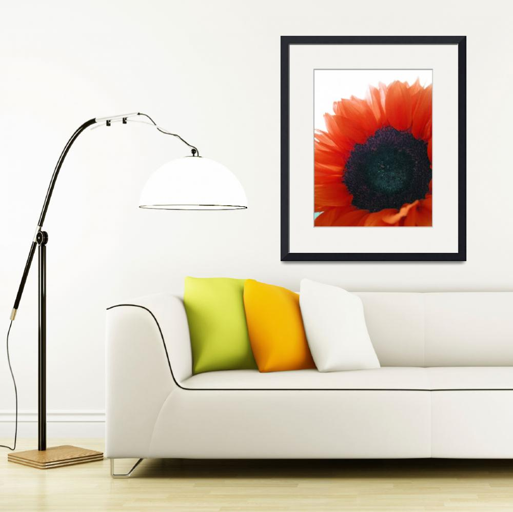 """Orange Crush Sunflower&quot  (2011) by Rachelheath"