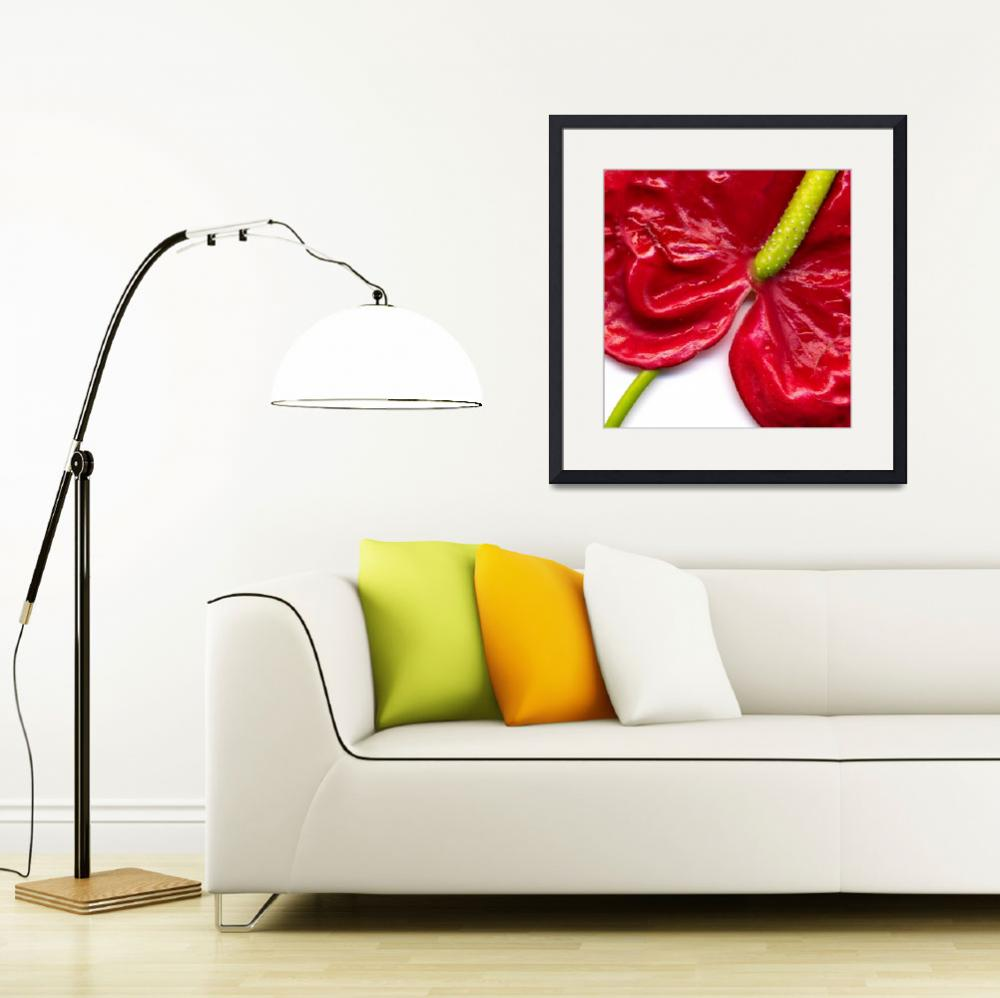 """Anthurium&quot  (2007) by dawnleblanc"