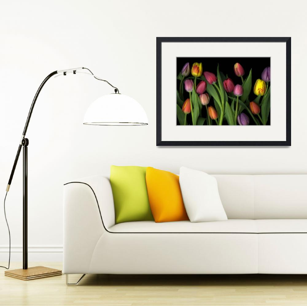 """Painted Tulips&quot  (2009) by CSlanecPhoto"