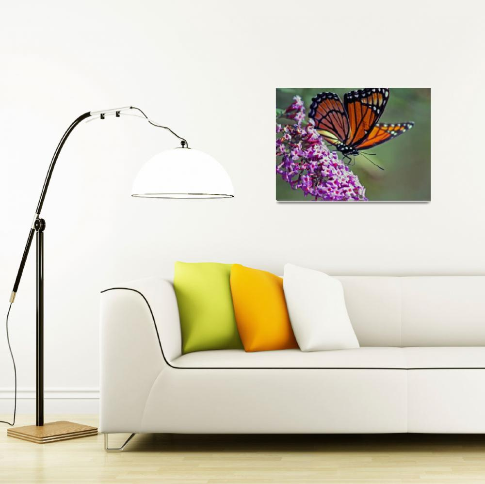 """Butterfly  Viceroy&quot  (2011) by KsWorldArt"