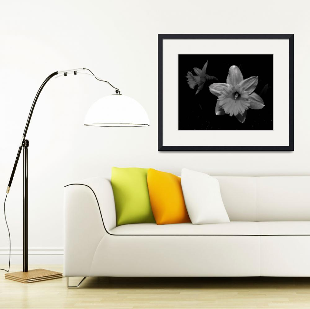"""Daffodil in Black and White&quot  (2008) by bavosiphotoart"