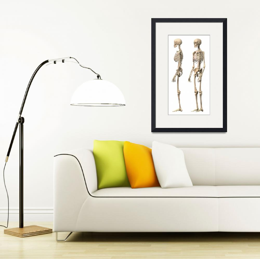 """Anatomy of male human skeleton, side view and pers&quot  by stocktrekimages"