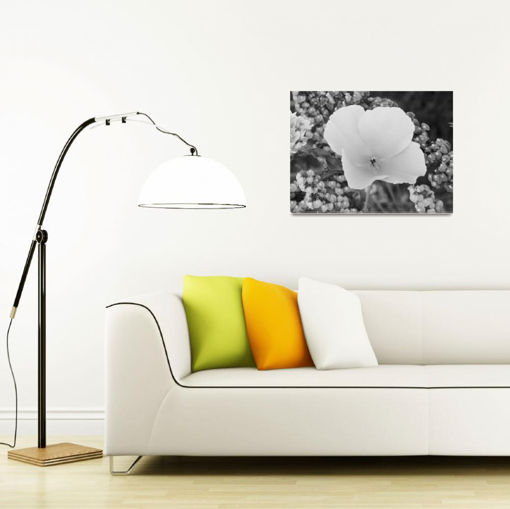 """Poppy Flower - Black And White Photography&quot  by artsandi"