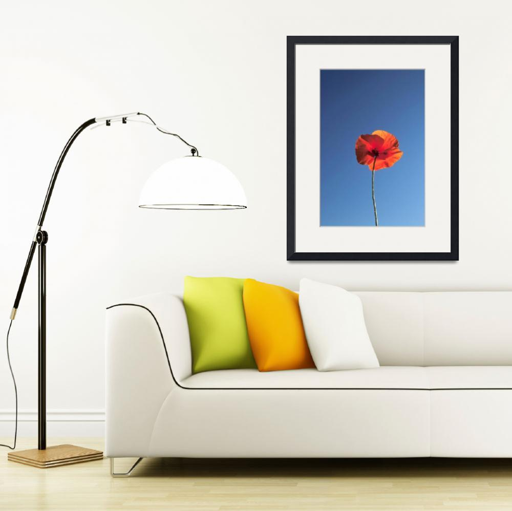 """corn poppy&quot  (2006) by balonp"