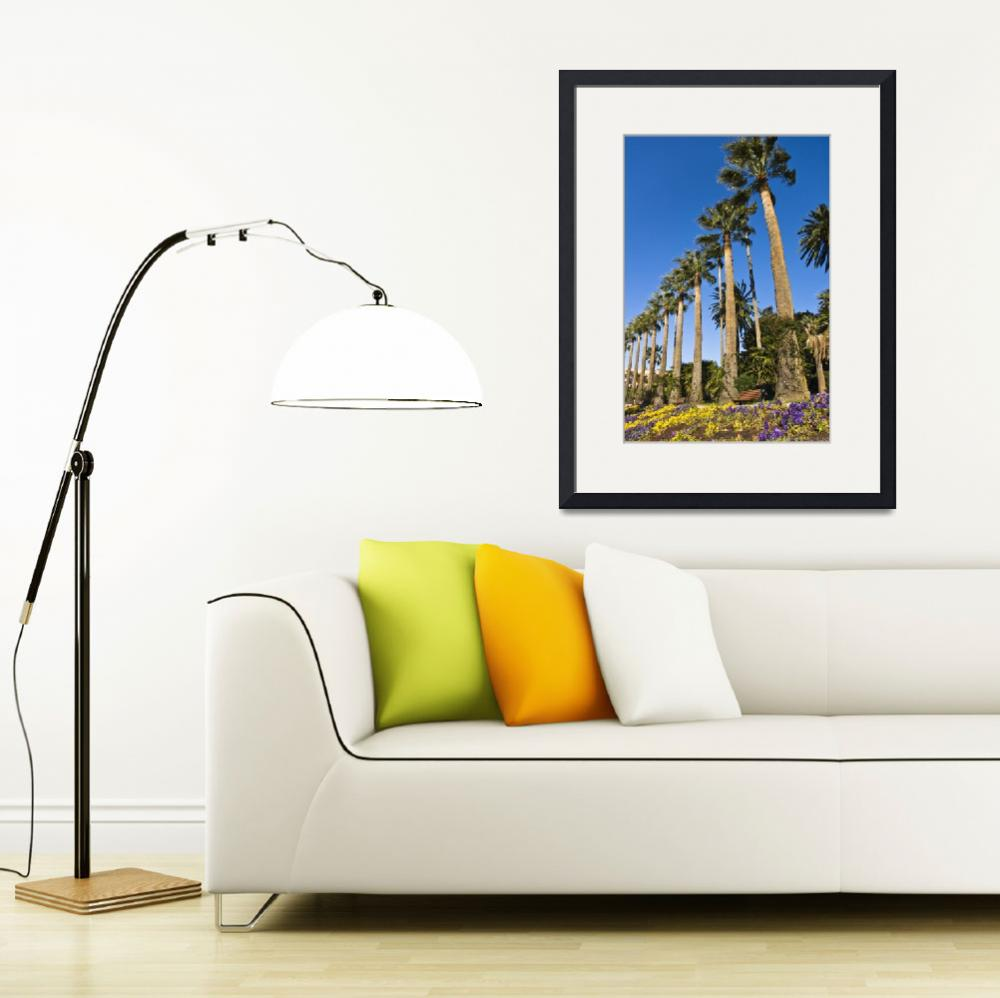 """Palmiers - Palm trees - Beaulieu - French Riviera&quot  by Jean-Bernard-MICHEL"