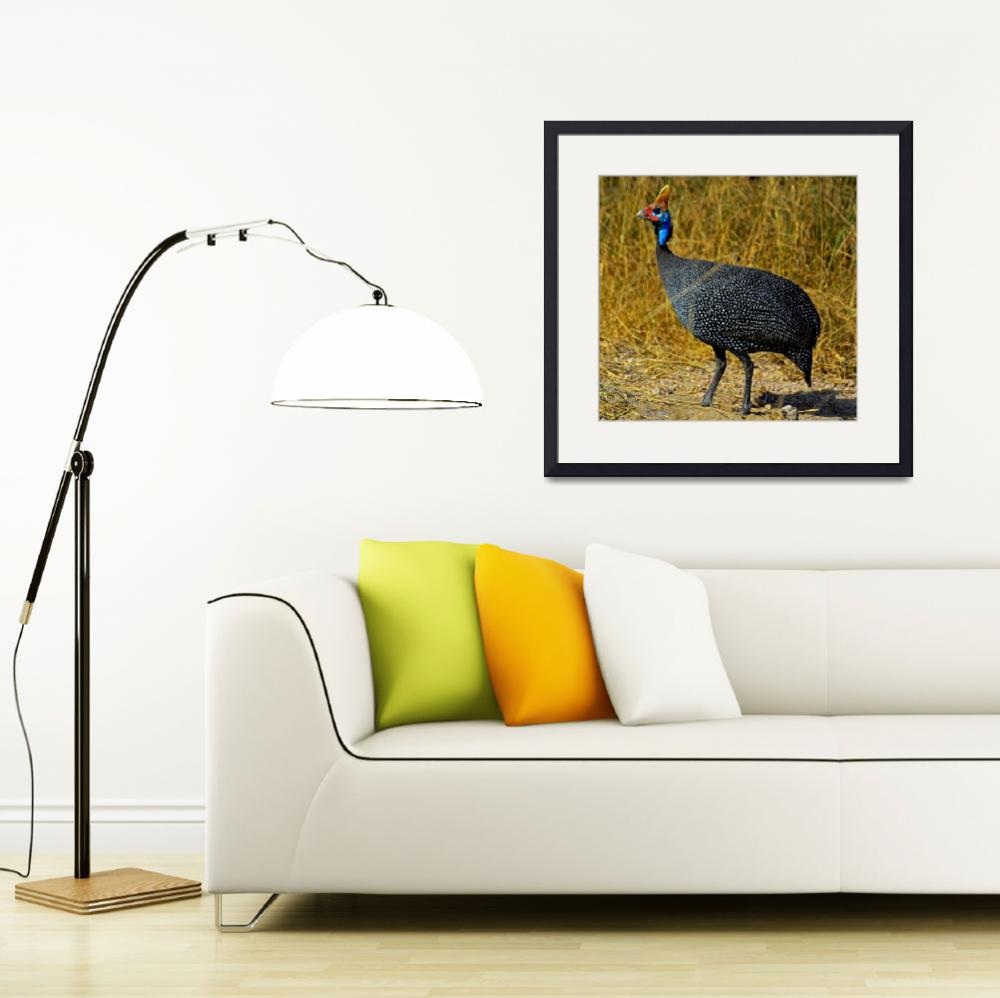 """Helmeted Guineafowl&quot  (2012) by pravine"