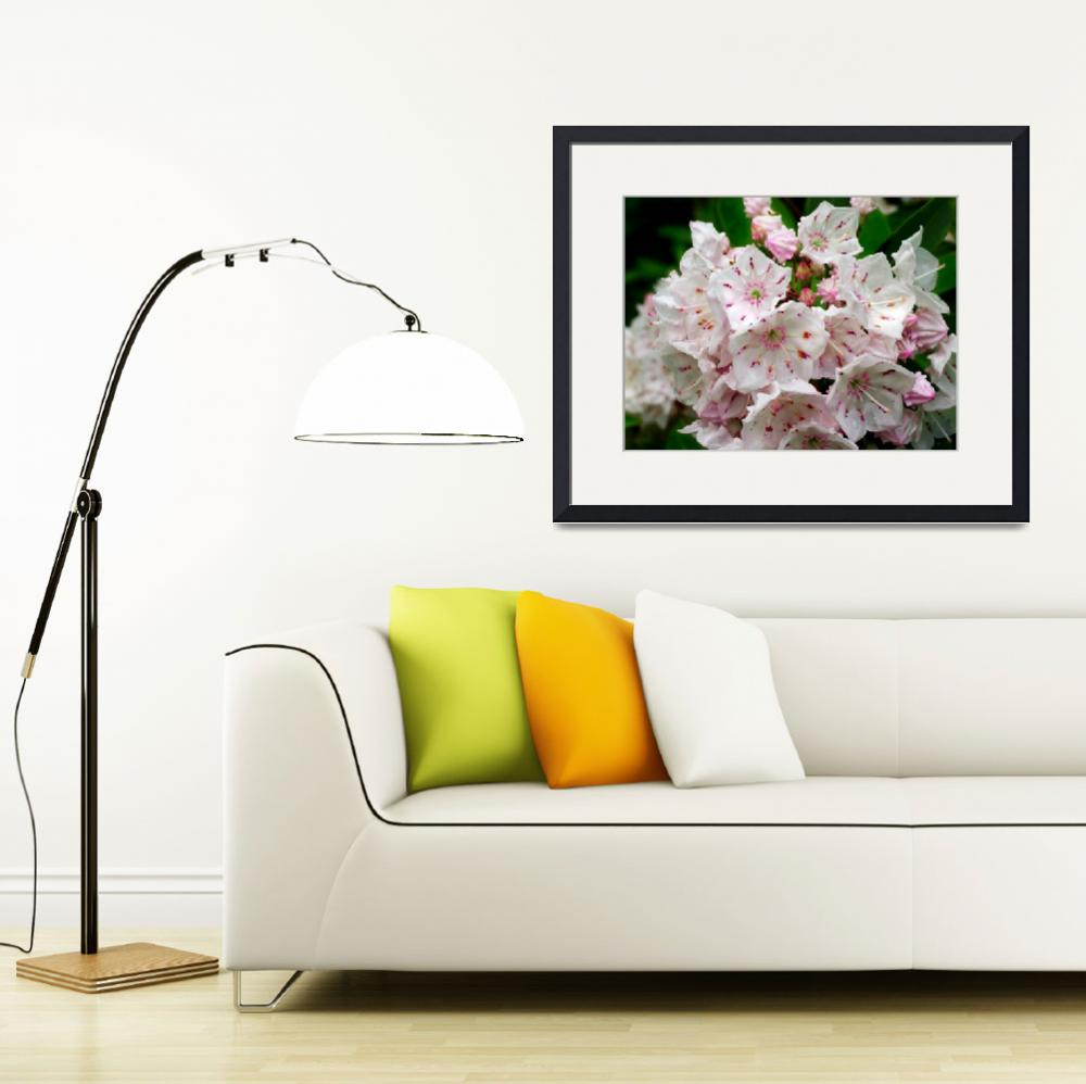 """Mountain Laurel Magic&quot  (2012) by newimage"