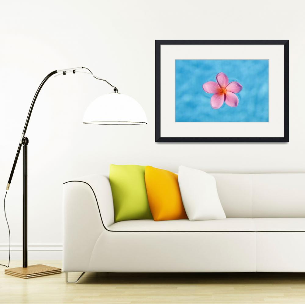 """Bright Pink Plumeria Floating In Turquoise Water&quot  by DesignPics"