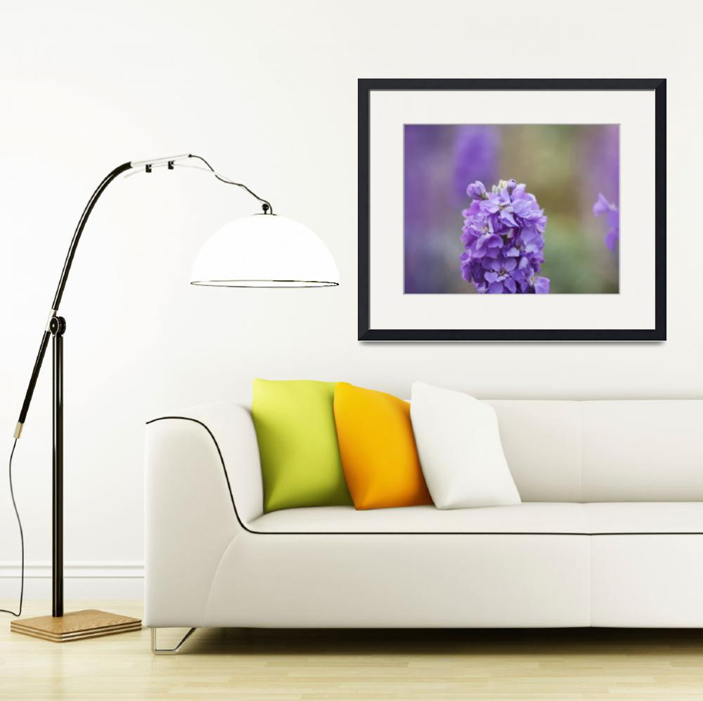 """Purple flower in bloom photography&quot  (2014) by SammyPhoto"