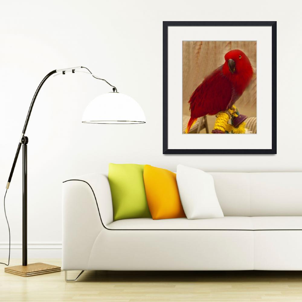 """Female Eclectus (2)&quot  by janesprints"
