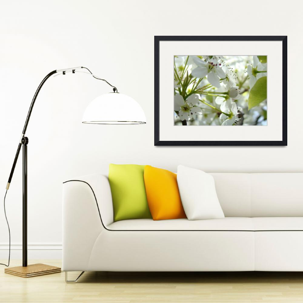 """TREE BLOSSOMS 27 White Spring Blossoms Art Prints&quot  (2009) by BasleeTroutman"