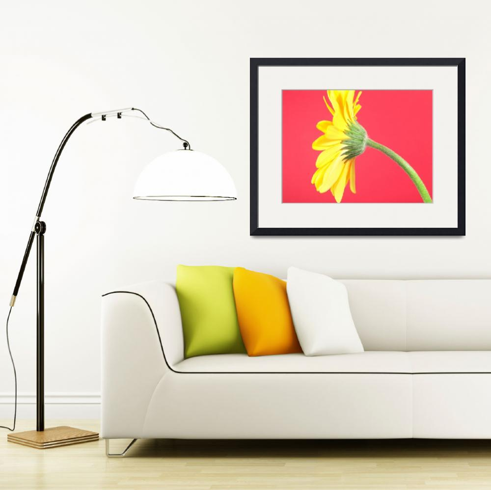 """Yellow Gerbera Daisy Solitary&quot  (2006) by Infomages"