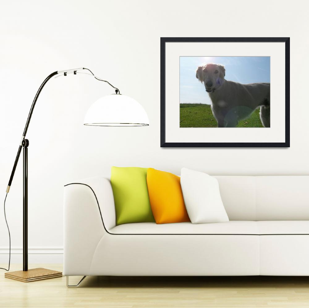"""Saluki Dog&quot  (2008) by fizzyimages"