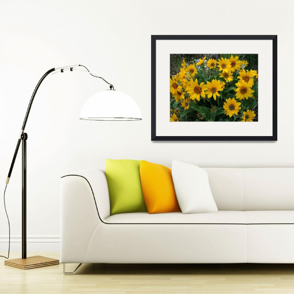 """Arrowleaf balsamroot&quot  by eye4nature"