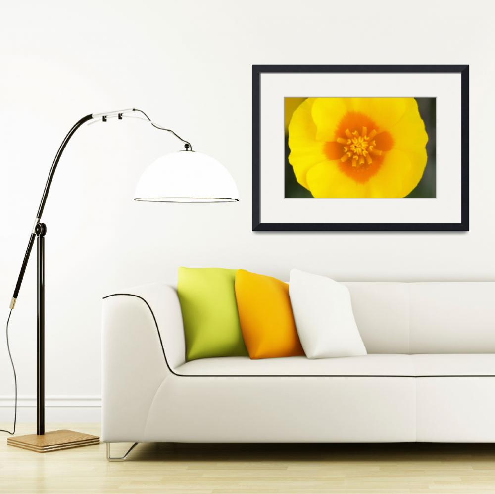 """Desert Poppy Flower Blossom Interior&quot  by Panoramic_Images"