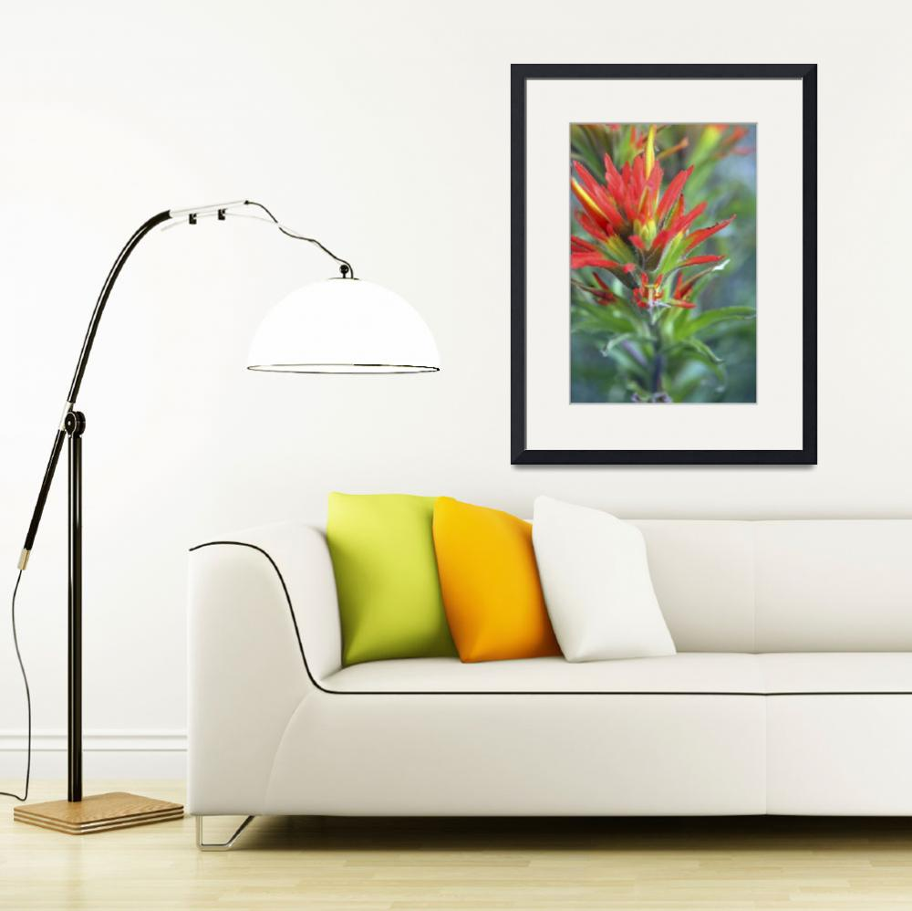 """Indian PaintBrush - 0889&quot  (2006) by BartElder"