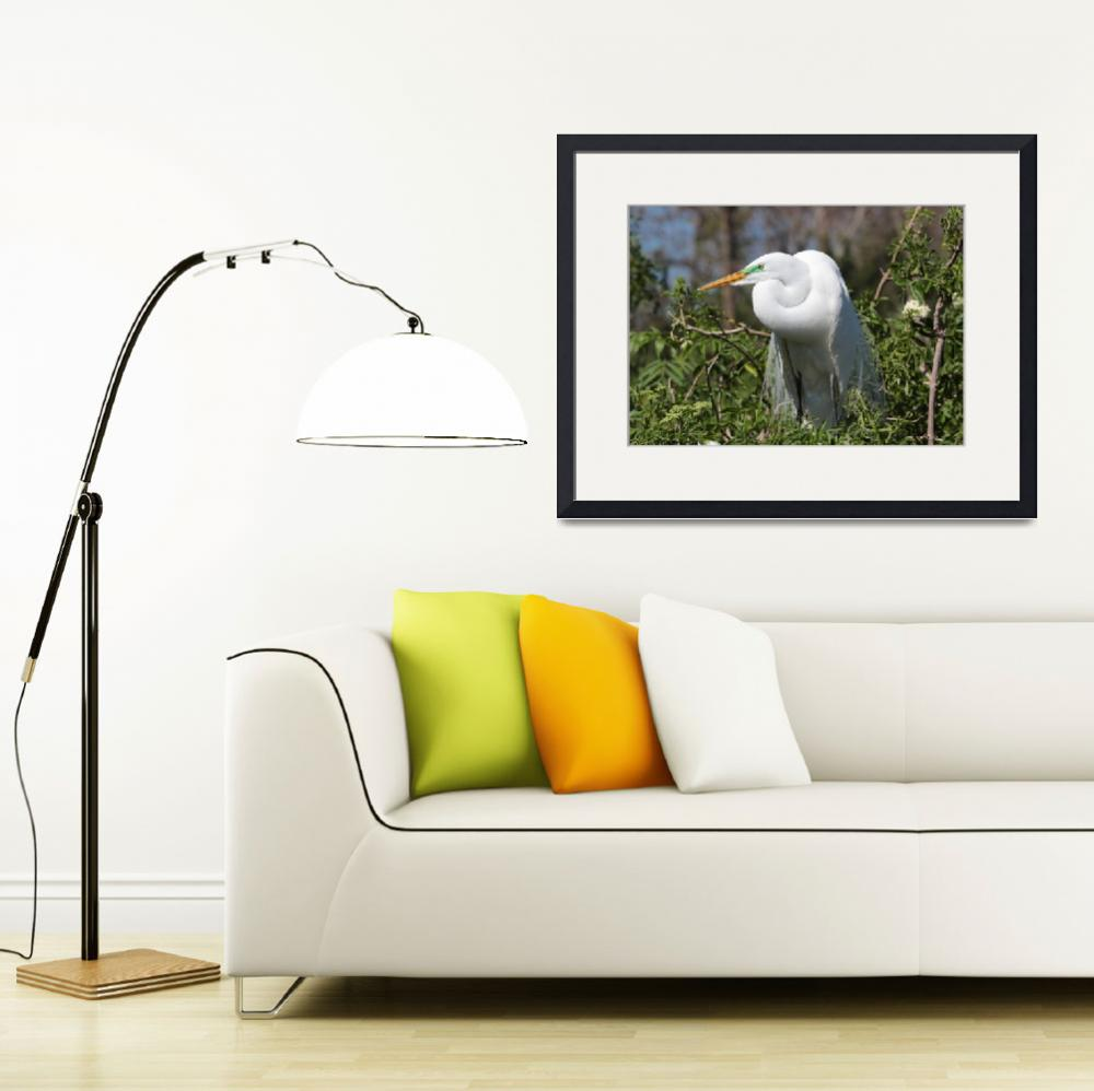 """Resting Great Egret&quot  by Groecar"