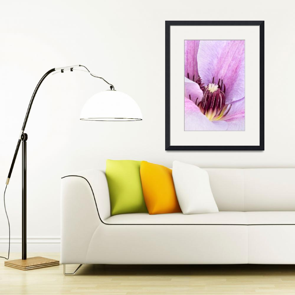 """Lilac Purple Clematis Print&quot  (2009) by NatalieKinnear"