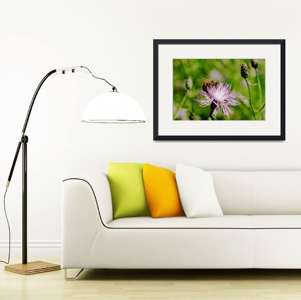"""Bee On Knapweed&quot  (2009) by bavosiphotoart"