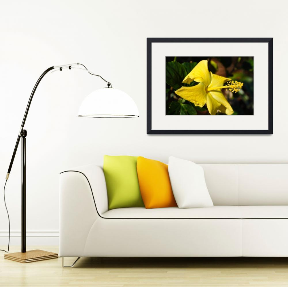 """Yellow Hibiscus&quot  (2011) by julieandel"