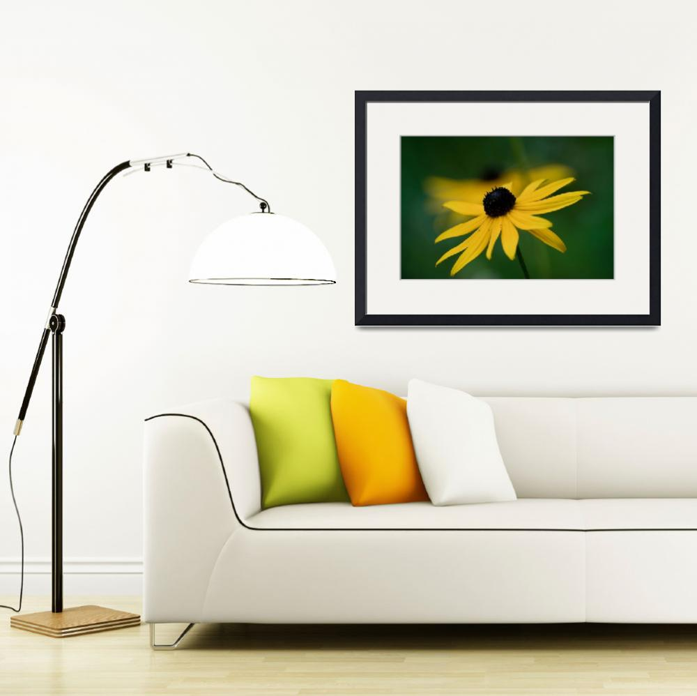 """Black Eyed Susan&quot  by roscoedv"