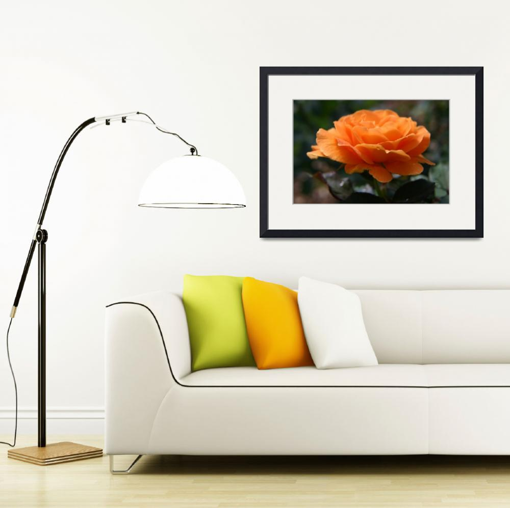 """Natural Orange Rose Flower&quot  (2009) by H_Kaufman"