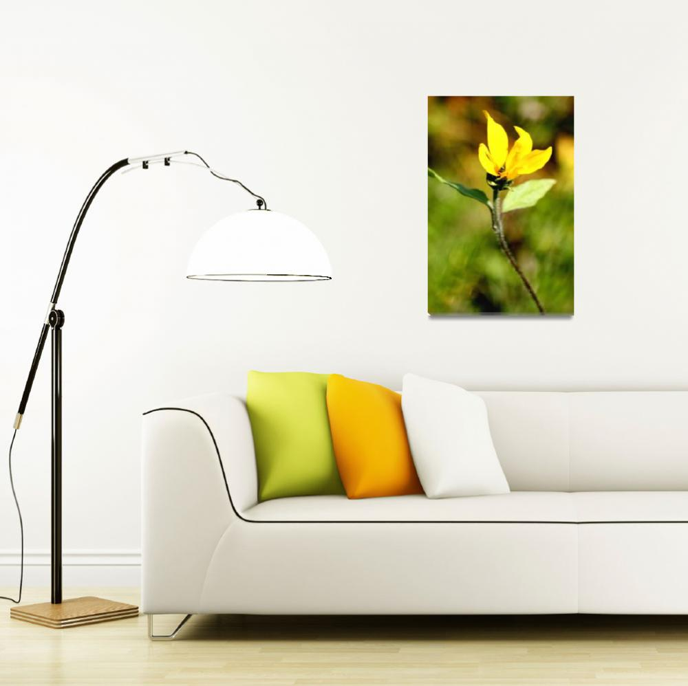 """Bright Yellow Wildflower&quot  (2008) by rayjacque"