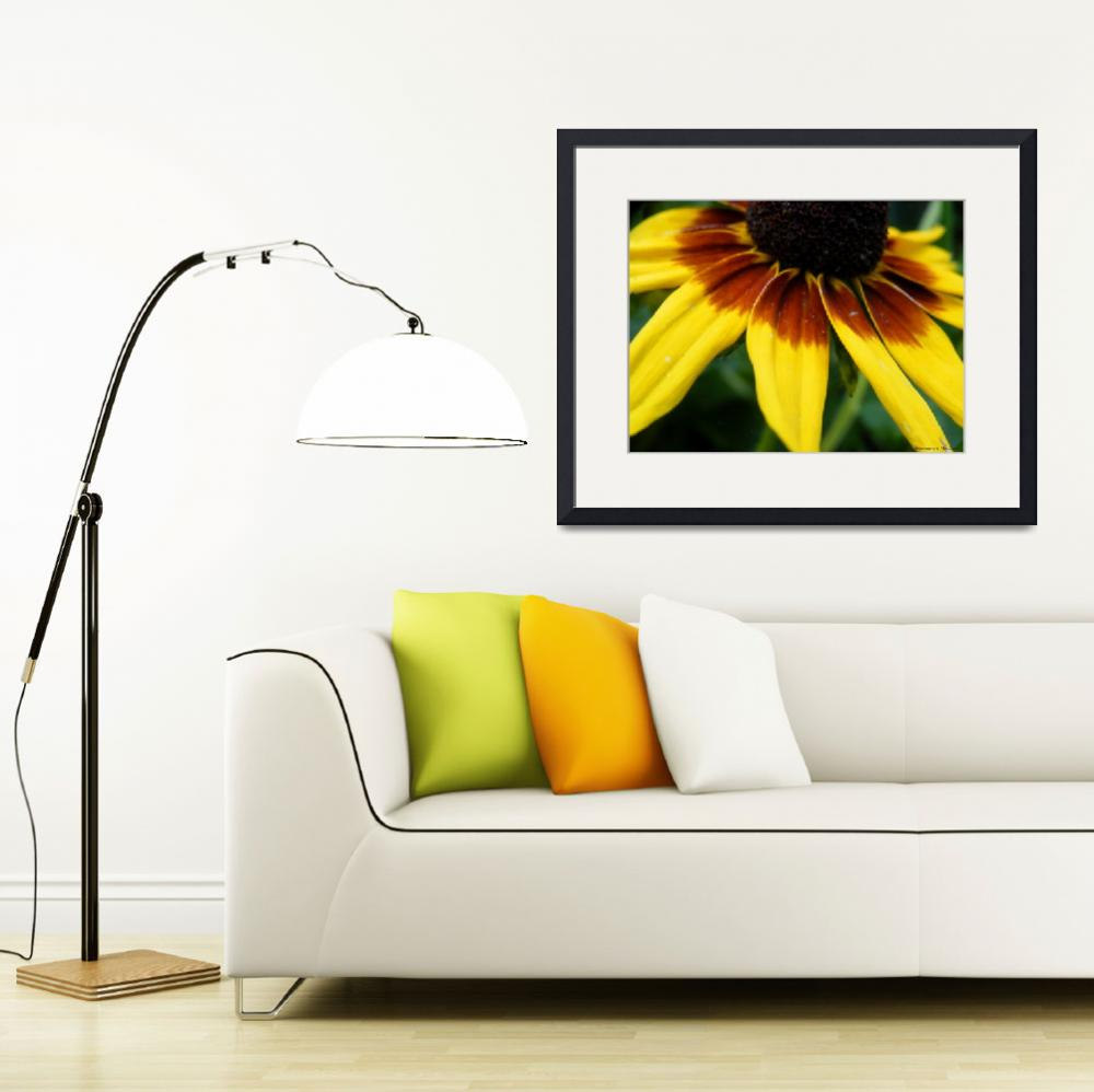 """Black Eyed Susan&quot  (2012) by Kimmary"