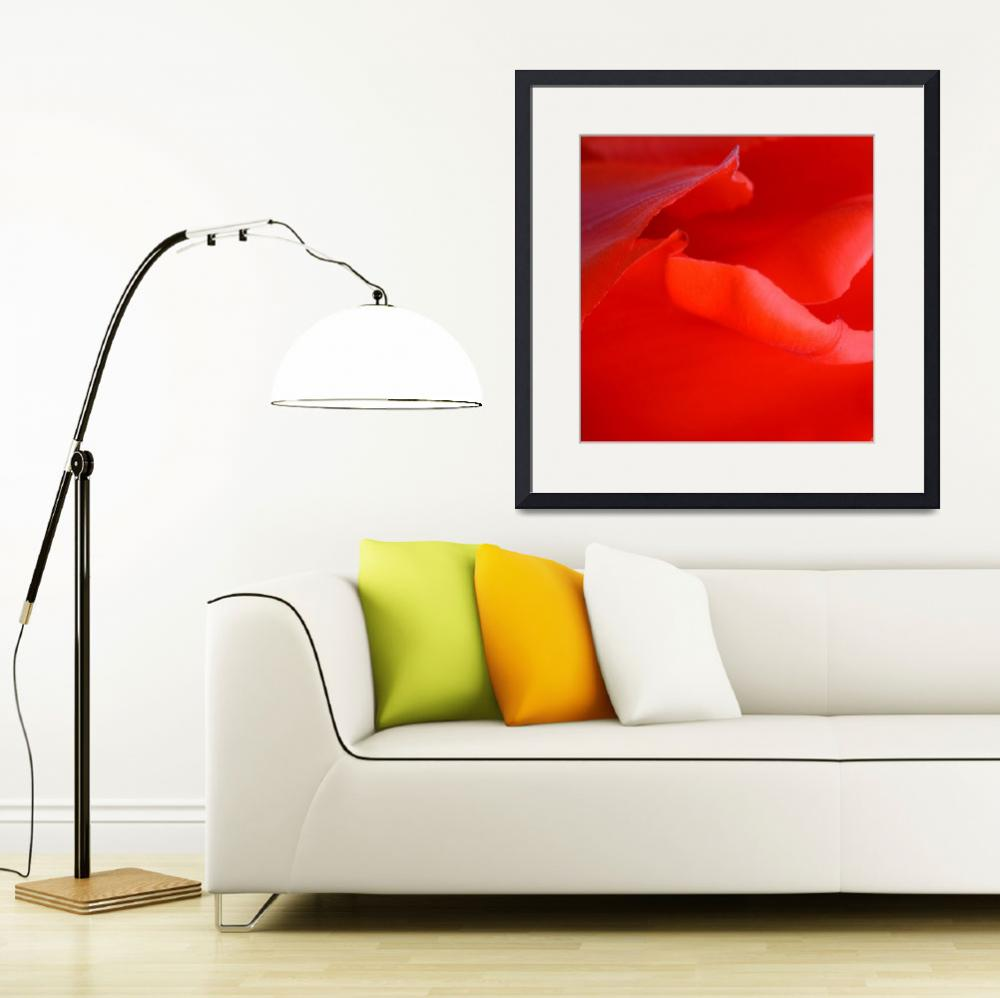 """""Red Tulip 6"" #6042315.0678 (5)&quot  (2015) by achimkrasenbrinkart"