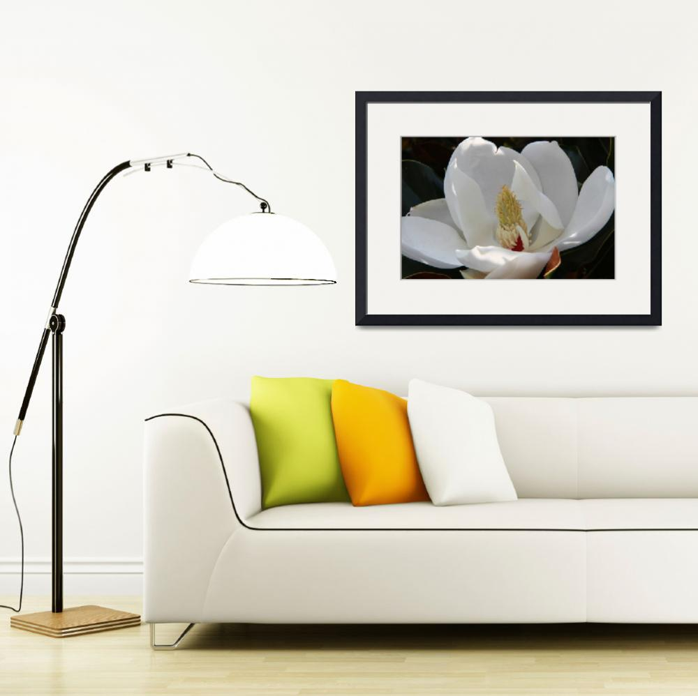 """White Magnolia&quot  (2010) by easyfigure"