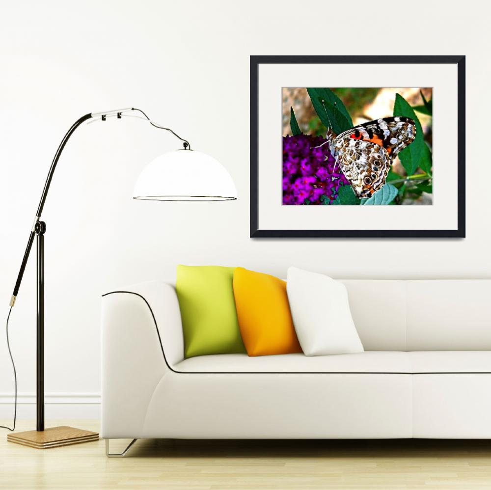 """American Painted Lady Butterfly I&quot  (2008) by trevortrent"