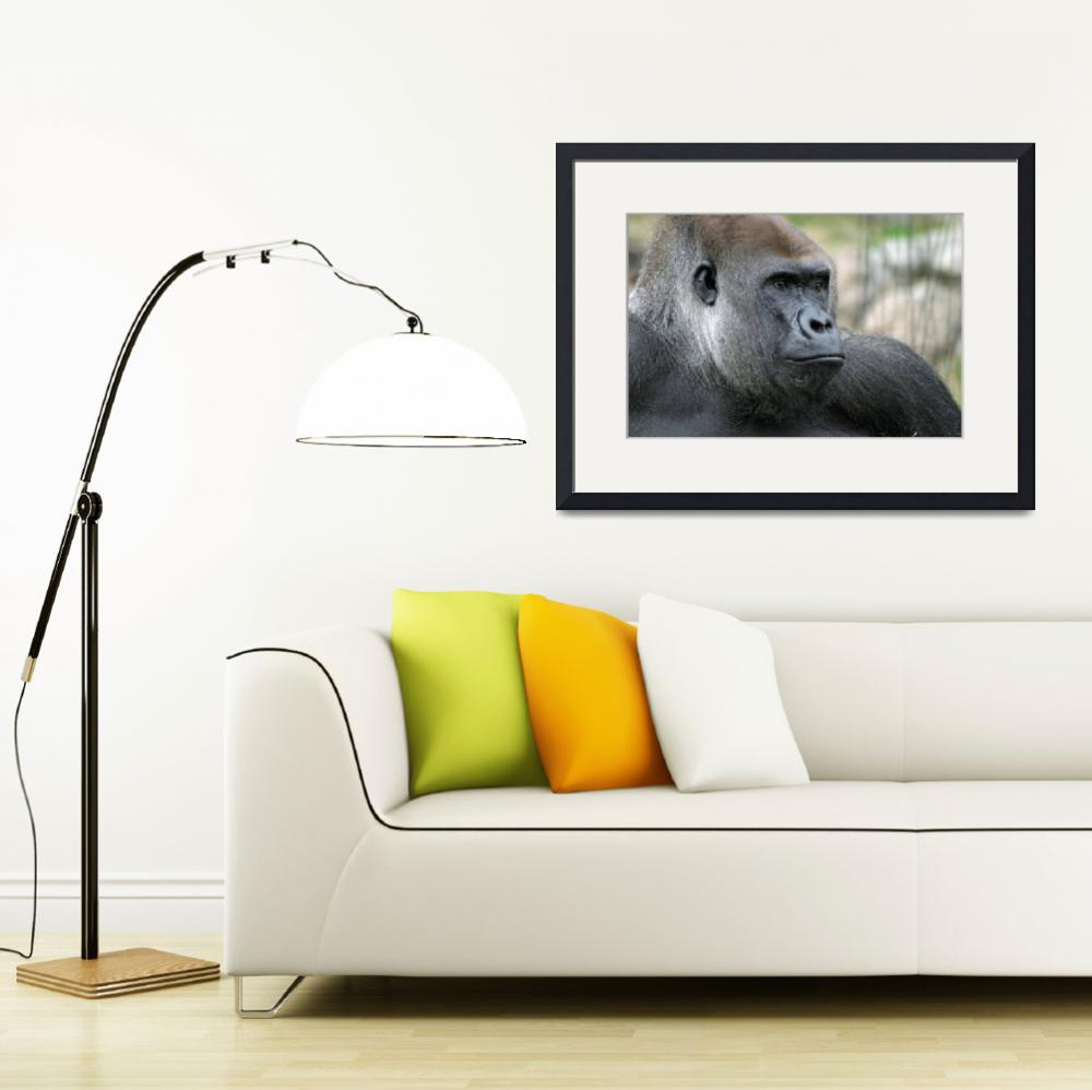 """Silverback Portrait&quot  (2007) by RanaKWilliamson"