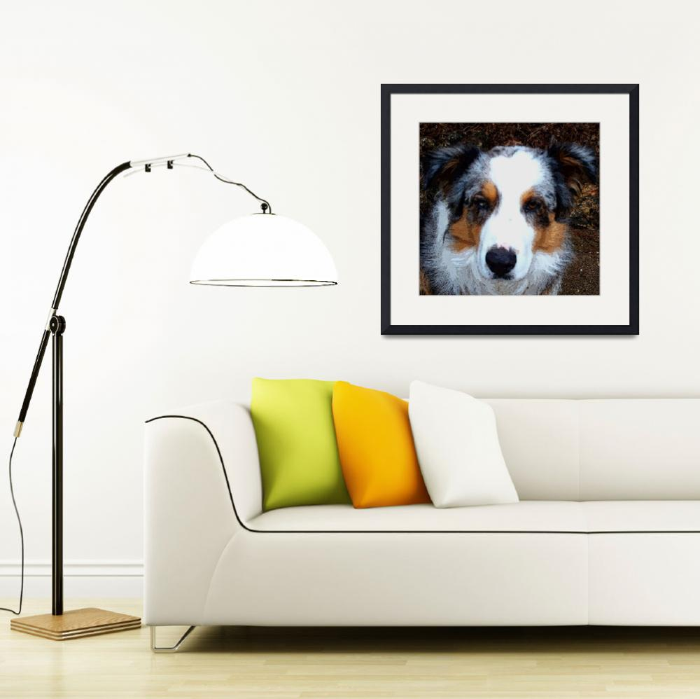 """""Awesome"" the herding collie&quot  (2010) by DavidHensenPhotography"