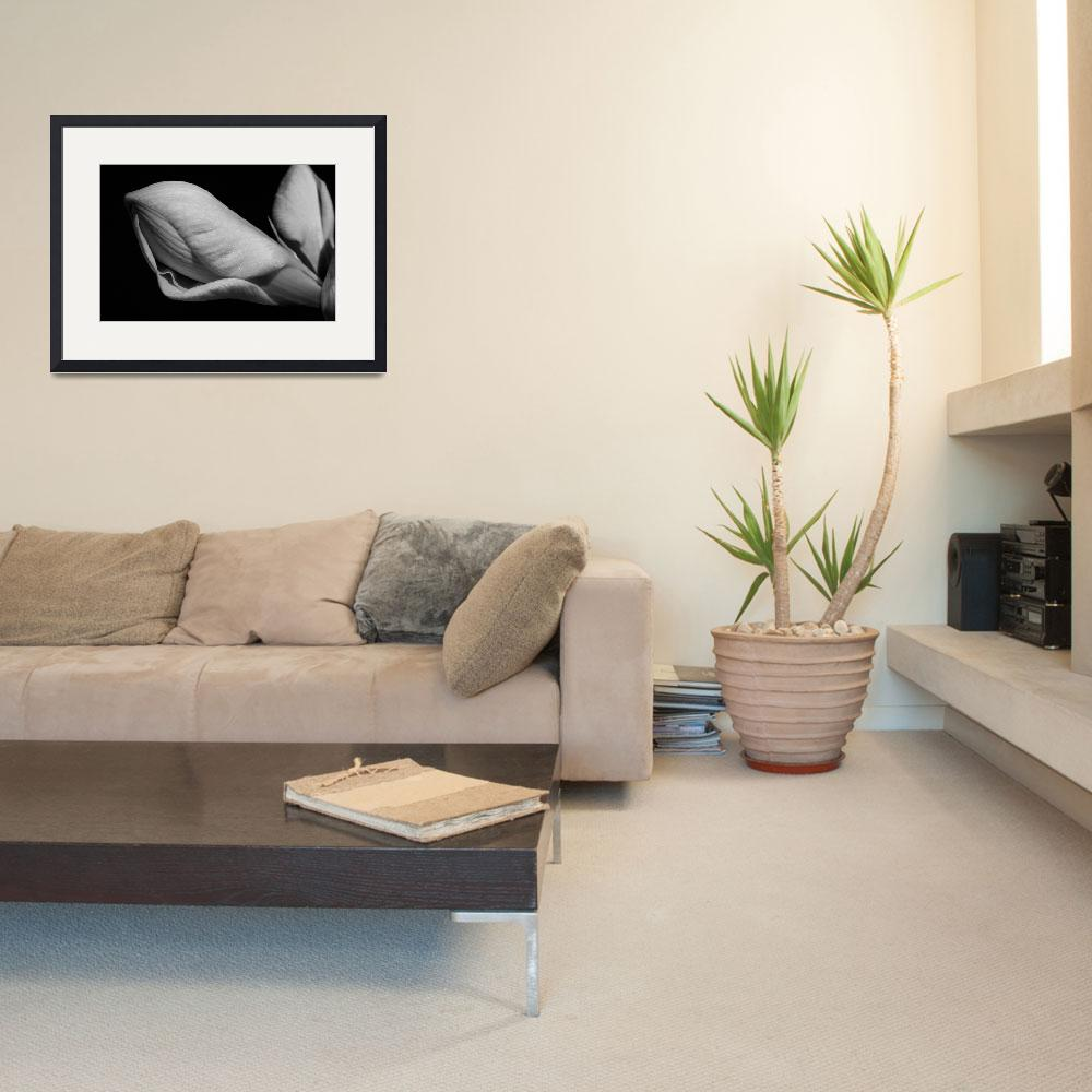 """Amaryllis Black and White Fine Art print&quot  (2008) by lightningman"