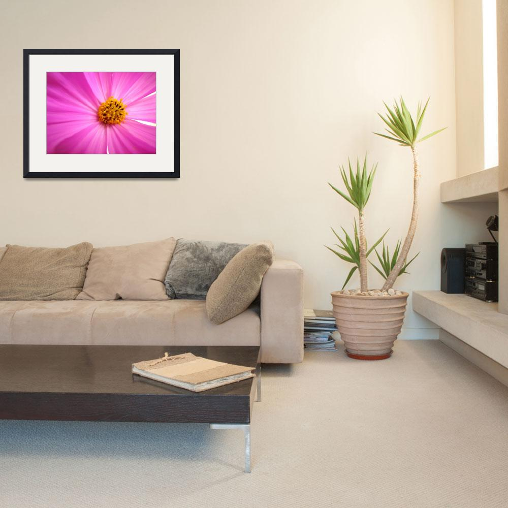 """Pink Cosmo&quot  (2008) by BuyArt"