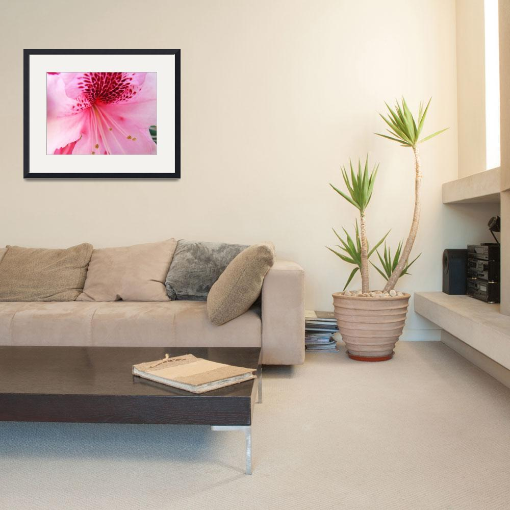 """Christmas Gift Gallery PINK RHODODENDRON Art&quot  (2009) by BasleeTroutman"
