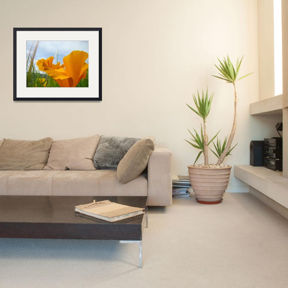 """Poppies Art Prints Orange Poppy Flowers Meadows&quot  (2014) by BasleeTroutman"
