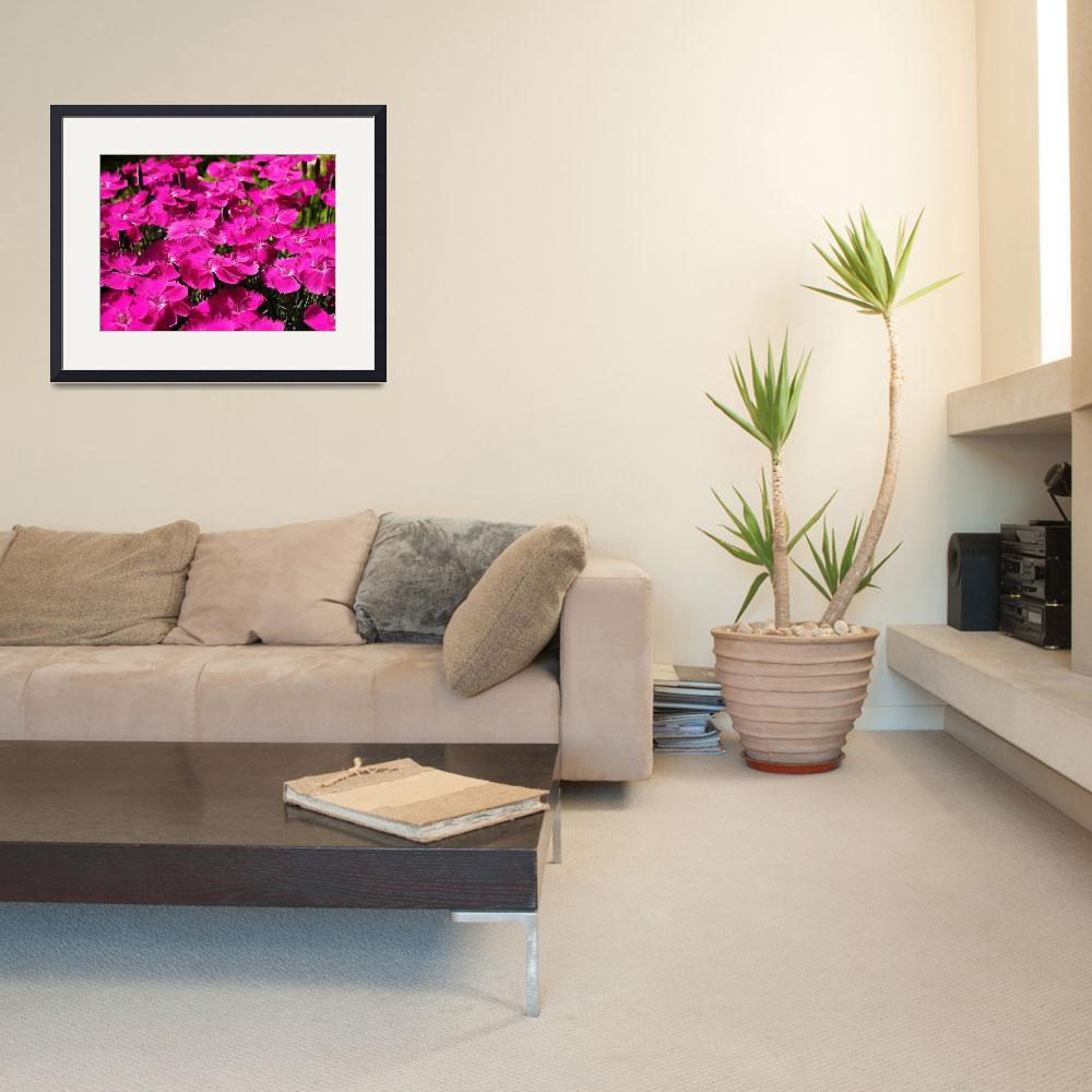 """Pink Dianthus Flowers&quot  (2011) by rewards4life"