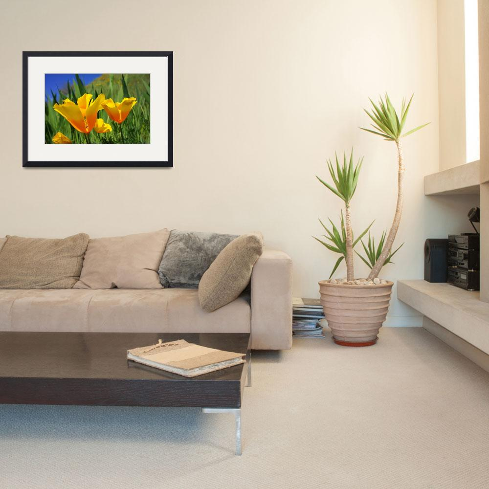 """Poppies Flowers Photography Art Prints Poppies&quot  (2014) by BasleeTroutman"
