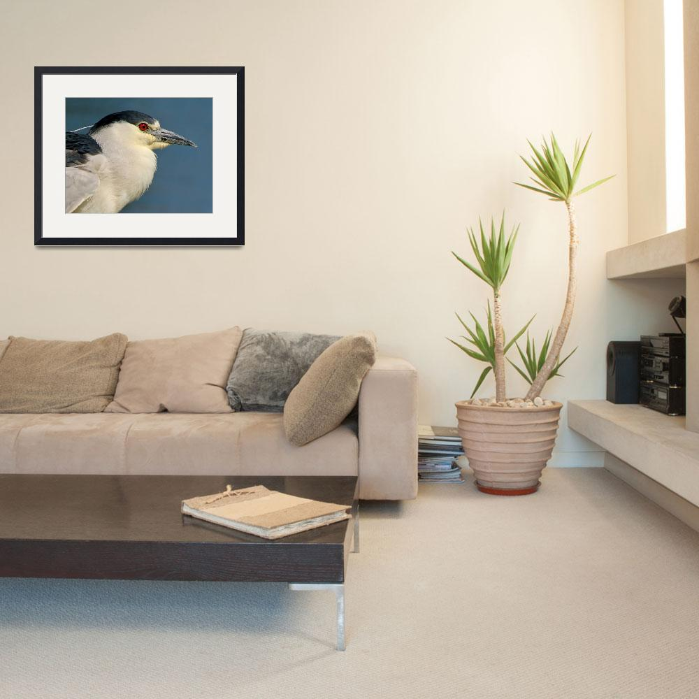 """Black-crowned Night Heron&quot  (2007) by Laverman"