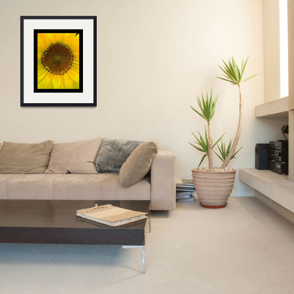 """Sunflower Shining&quot  (2012) by timdressler"