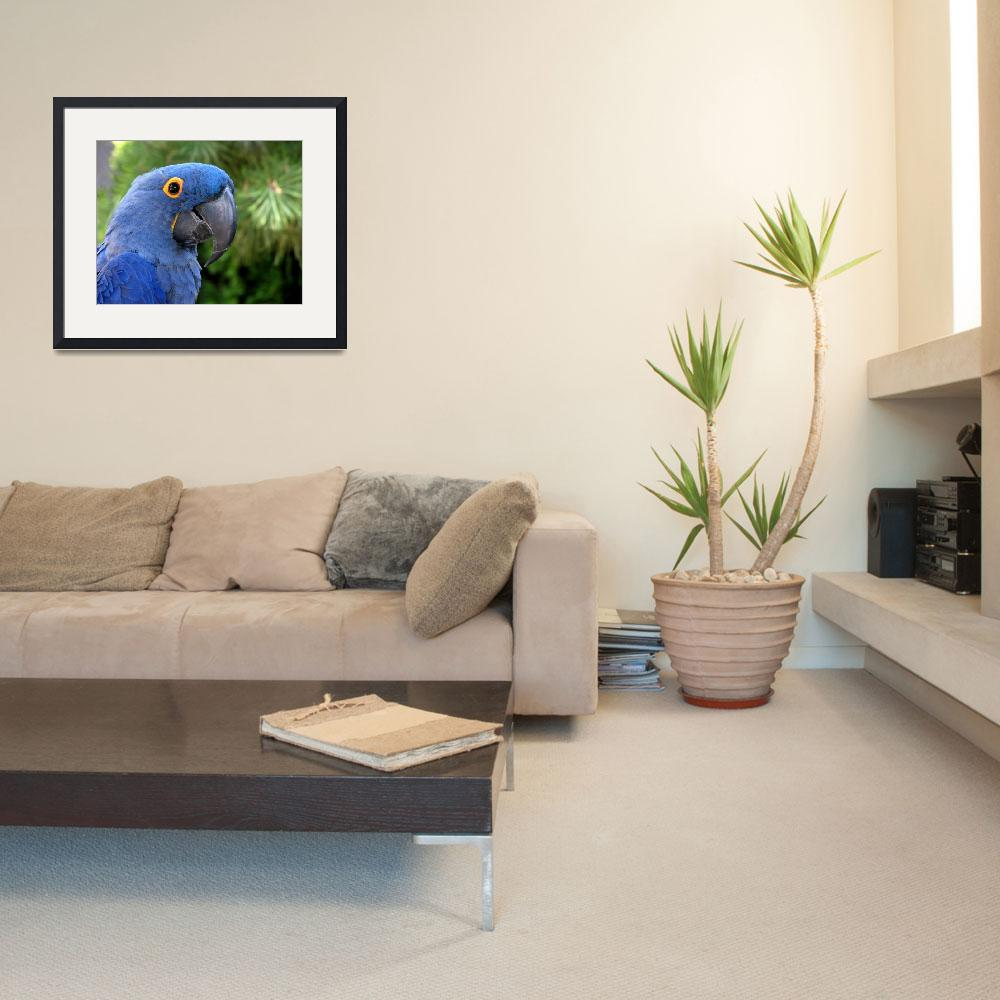 """Blue Macaw&quot  (2008) by hawksmom"