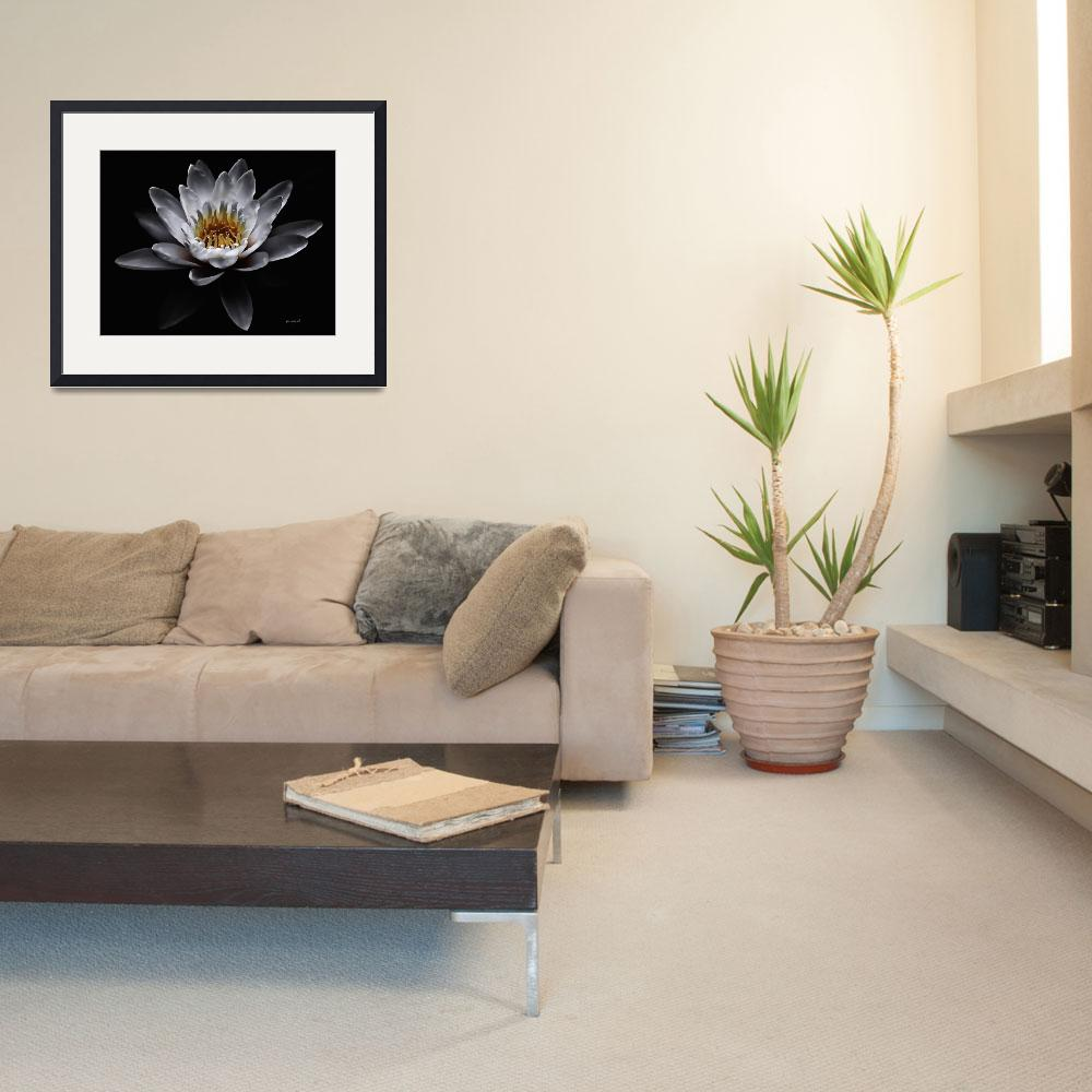 """White Waterlily&quot  (2009) by johncorney"