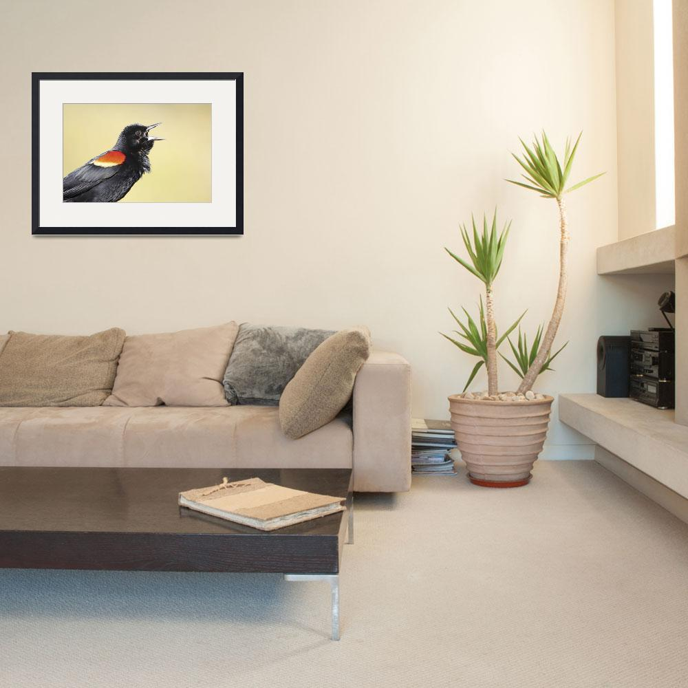 """Red-Winged Blackbird Photograph&quot  by ArtLoversOnline"