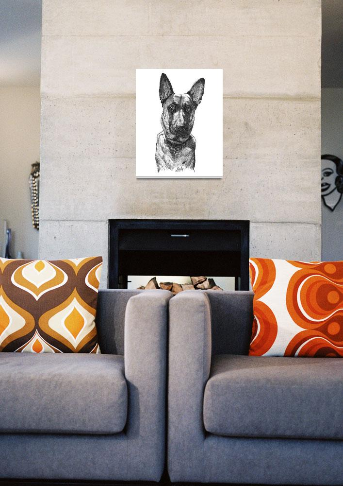 """Young Belgian Malinois&quot  by Tim"