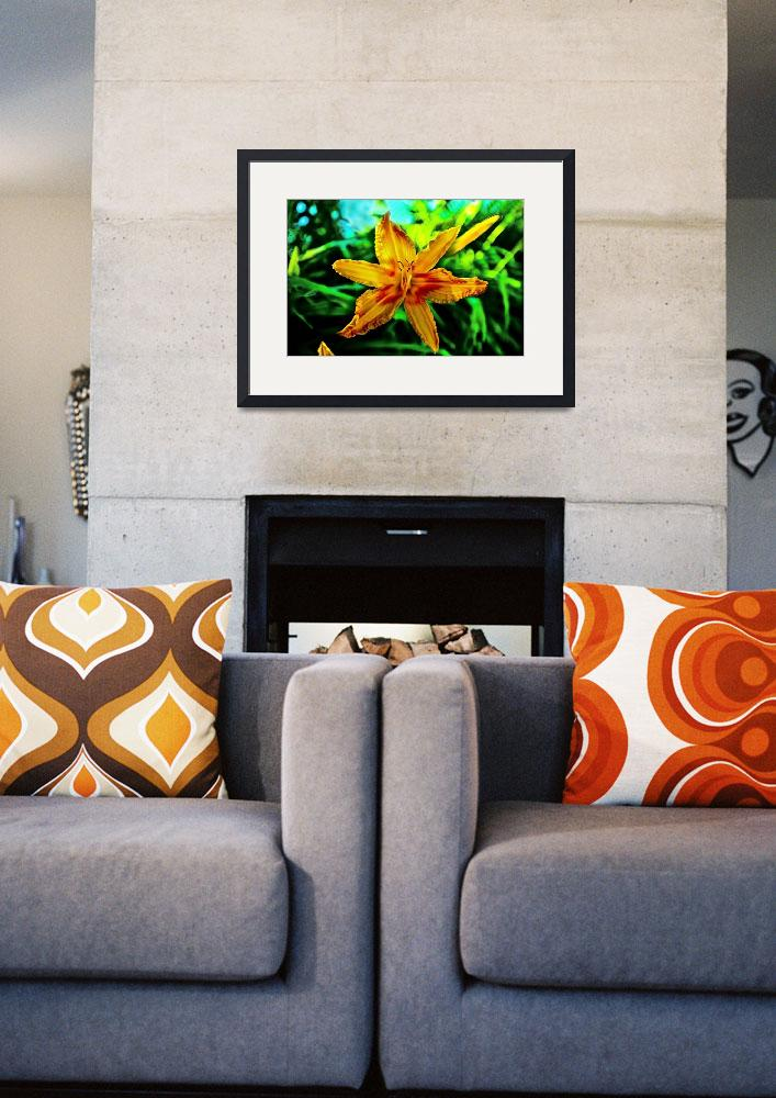"""Yellow and Orange Asiatic Lily&quot  by ROBERTSCOTTPHOTOGRAPHYY"
