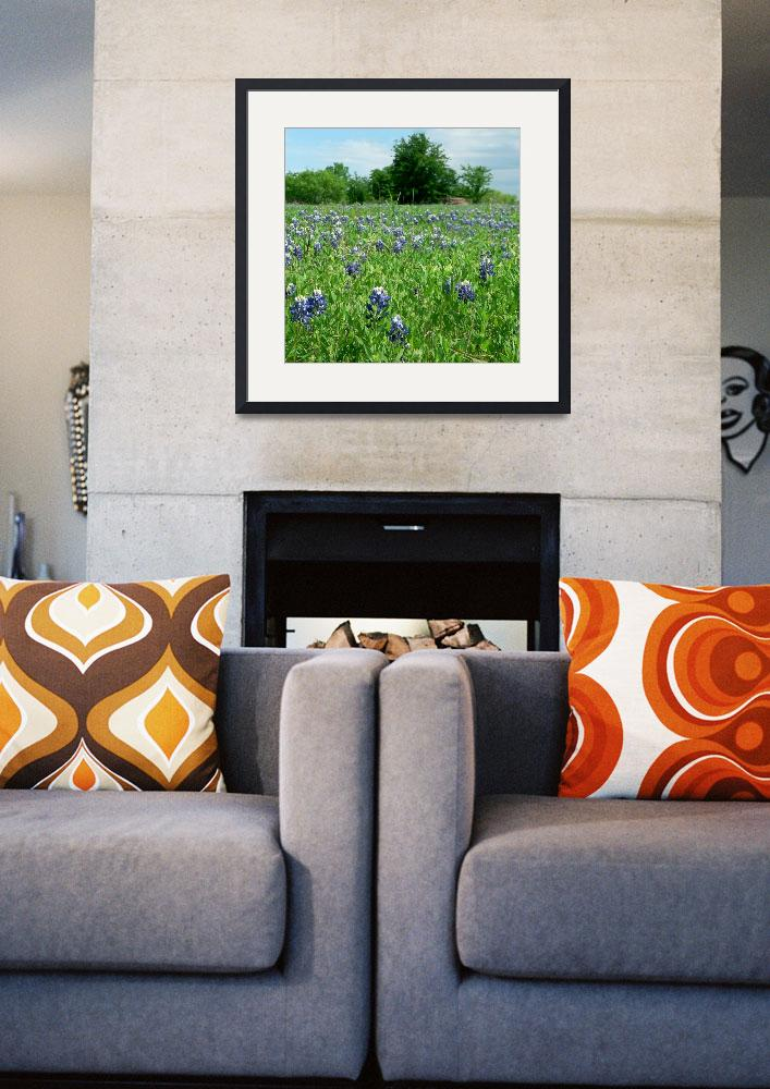 """Scenic TX Wildflowers1100063&quot  (2010) by rayjacque"
